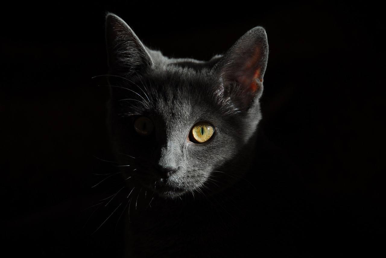 Navigera i mörkret med nattkikare