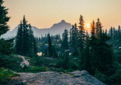 Det stora ansvaret i skogsförvaltning