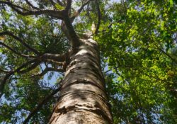 Trädbesiktning ger dig svaren